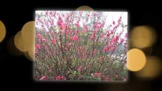 Khúc Nhạc Mừng Xuân