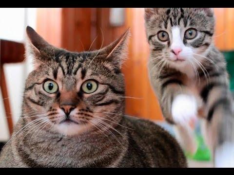 Te kociaki was oczarują!