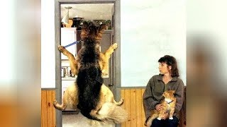 PETS vs VETS; who will win? - You'll LAUGH more than you should!
