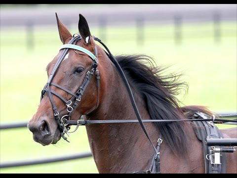 Meet Pure Country -- Super Pacing Filly