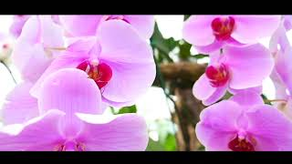 Música de arpa relajante - Positive Vibes   - REAXING HARP Music