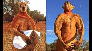 Roger the muscly kangaroo that took the internet by storm dies at 12 - Daily News