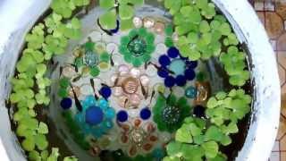 Hồ cá 7 màu (^.^) - Guppy Pond