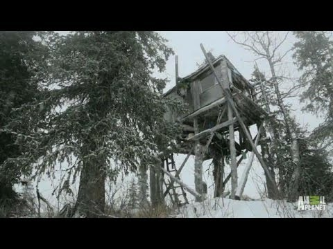 Alaskan Treehouse Repairs   Treehouse Masters - Smashpipe Entertainment
