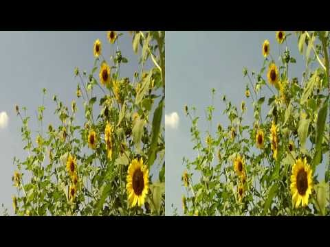Toshiba Camileo Z100 3D camcorder YT3D Stereoscopic Garden Demo Video