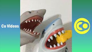 Ultimate Shark Puppet Vines Skits 2020 | Funny Shark Puppet Vine Videos