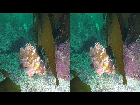 Dive 447: Midlin' Viz at Middle Reef YT3D by Wayne Grabowski