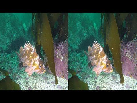 Dive 447: Midlin' Viz at Middle Reef YT3D by Wayne Grabowski