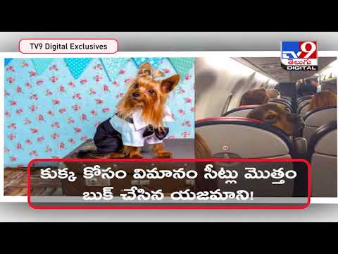 Owner books entire Air India business class cabin for pet dog