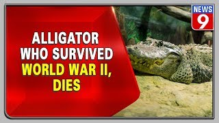 Alligator Saturn who survived World War II dies, rumours i..