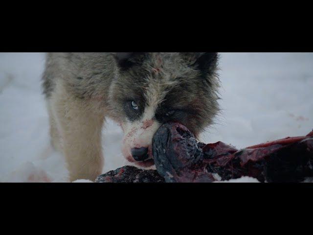 Un docu-clip magnifique pour «Raised By Wolves» de Geoffroy
