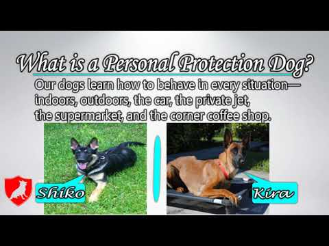 Best Trained Family Protection Dog for Sale