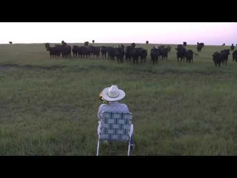 Baixar Serenading the cattle with my trombone (Lorde - Royals)