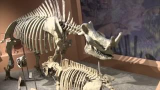 Smithsonian National Museum of Natural History - Washington D.C. - Walkthrough