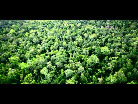A forest of opportunities in Paraguay