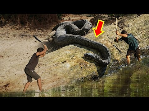 7 Largest Living Snakes in The World