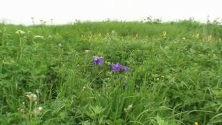 野付半島 尾岱沼に夏が来る by fsfk0612muu on YouTube