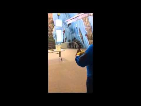 American Kestrel hovering