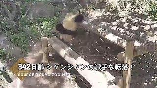 ☆ Cute Panda ☆ #16 衝撃 シャンシャンの派手な落下にびっくり!