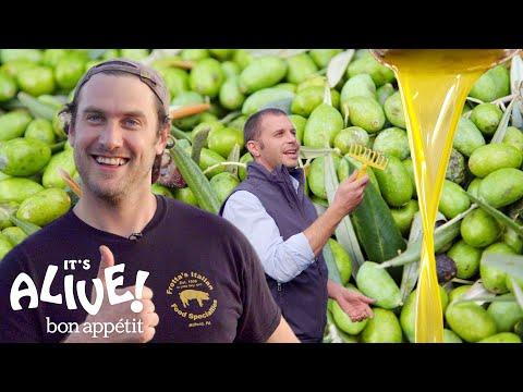 Brad Makes Olive Oil (In Italy!)   It's Alive   Bon Appétit