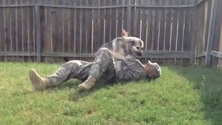 Dogs Welcoming Soldiers Home Compilation 2016 [NEW]