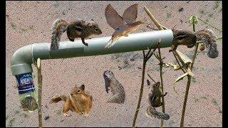 """Theo Chân Đi Bẫy Sóc Bằng """"Ống Nhựa PVC"""" Và Cái Kết Khó Tưởng .Squirrel Trap Using PVC"""