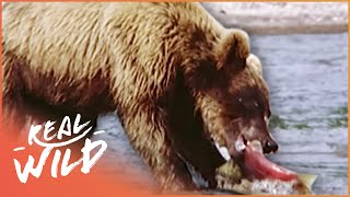 A Grizzly Paradise [Grizzly Bear Documentary] | Wild Things
