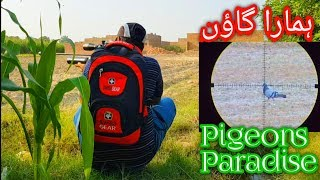 Wild pigeons & dove hunting in pakistan with airgun kral puncher jumbo .25