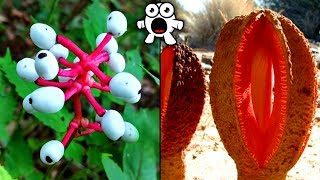 Top 20 Most Unusual Plants You Won't Believe Exist