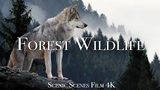 Forest Wildlife In 4K - Animals That Call The Forest Home   Scenic Relaxation Film