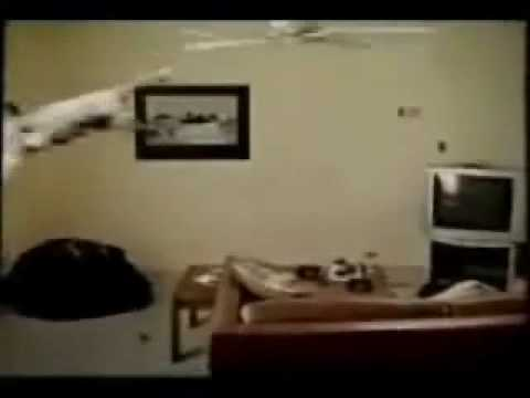 Ceiling Fan Cat Fail Cat Vs Ceiling Fan