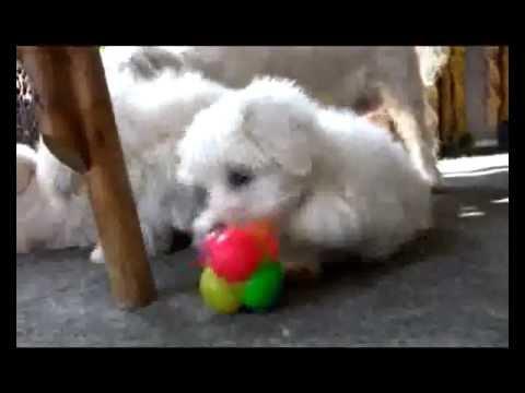 Nabavka psa