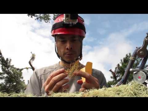 Redwood BioBlitz 2014
