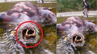 8 Amazing Cryptid Discoveries Explained