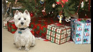 Funny Dogs Opening Their Christmas Presents Compilation 2017