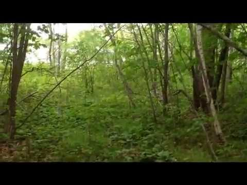 XXXX Fish Trap Lake Drive Cushing, MN 56443 | Lake Lot For Sale | Aspire Realty of Little Falls