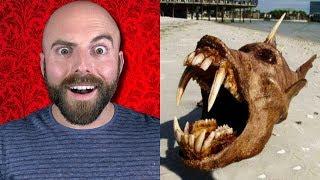10 Weirdest Things Ever Found in the Ocean!