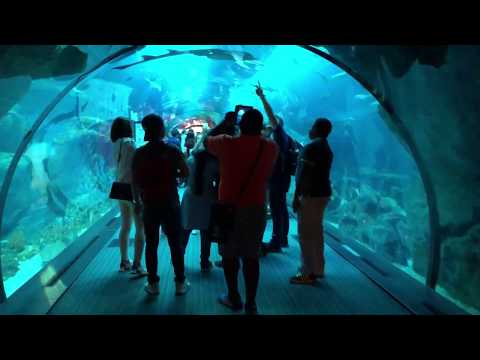 Dubai Mall Aquarium and Underwater Zoo 2018