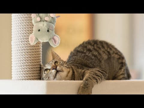 Funny Cats Scared of Stuffed Animals Compilation (2017)