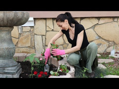 Ծաղկատունկ - Planting Garden Flowers - Mayrik by Heghineh