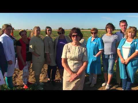 Отчёт Быковской БСОС по новым сортам и гибридам