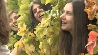 КОСОВСКИ БОЖУРИ - Догодине на Косову -