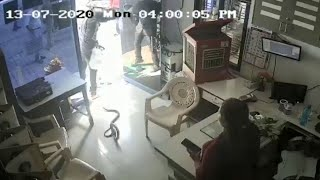 On cam: Man throws huge snake inside petrol pump owner's c..
