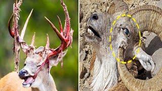 देखें कैसे अपनी जान खुद ले लेते हैं ये जानवर! TOP 10 POWERFUL ANIMALS WHO ARE SOMETIMES UNLUCKY