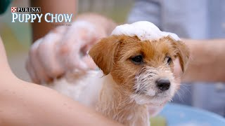 When You Walk Your Anxious Puppy // Presented By BuzzFeed & Puppy Chow