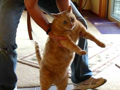 Fat Cat dancing to Word Up - YouTube