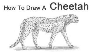 how to draw a cartoon hippopotamus