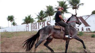 98af4fefef5 Balada do Vaqueiro NOVA JULHO - Vaqueiro de Luxo – Palco MP3
