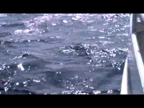 Betances Tours: Whale Watching