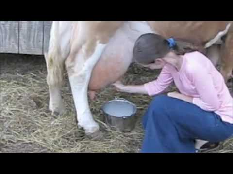 Muza krave 3